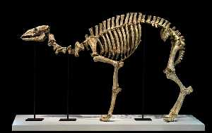 Nancy Graves - Pleistocene Skeleton