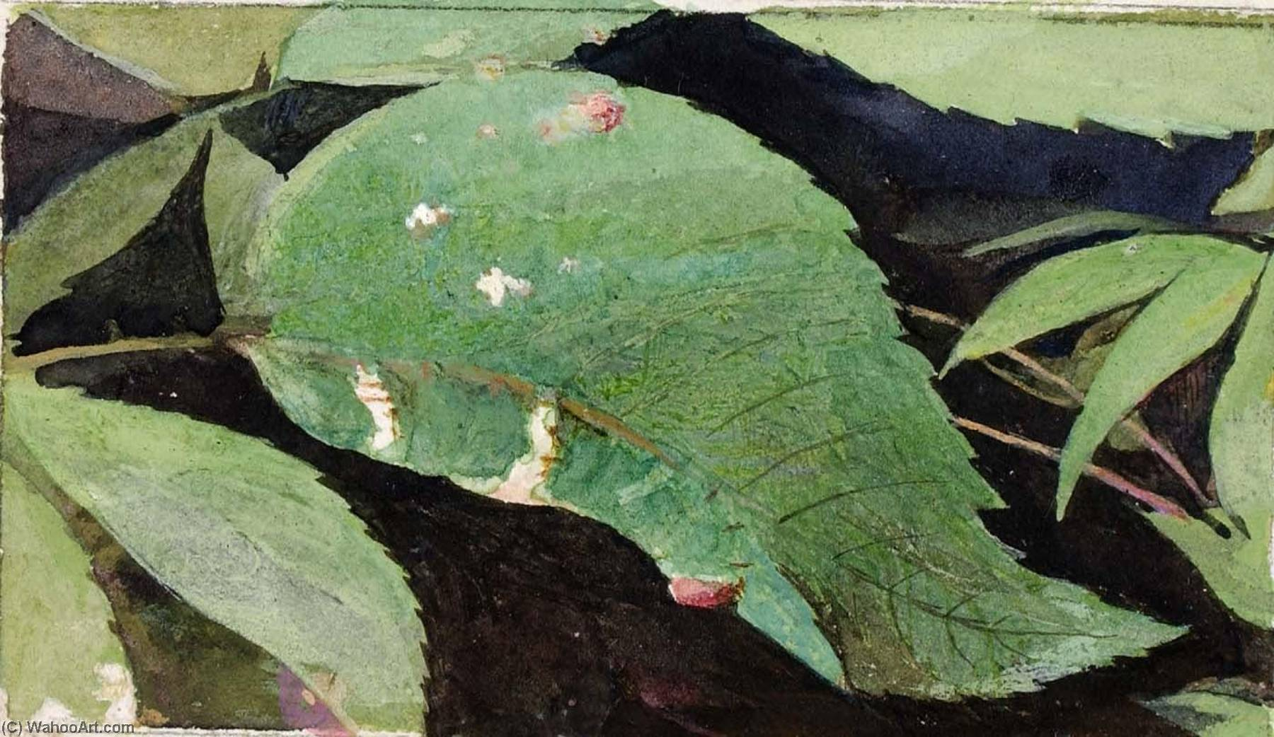 White Birch Leaf Edge Caterpillar, study for book Concealing Coloration in the Animal Kingdom by Emma Beach Thayer | Museum Quality Reproductions | WahooArt.com